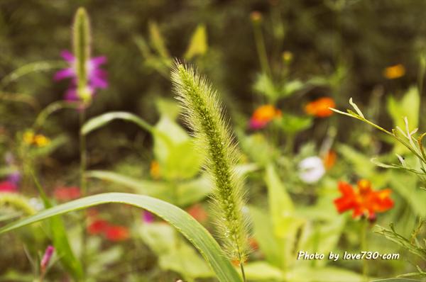 双陈记情侣博客-那些花那些草
