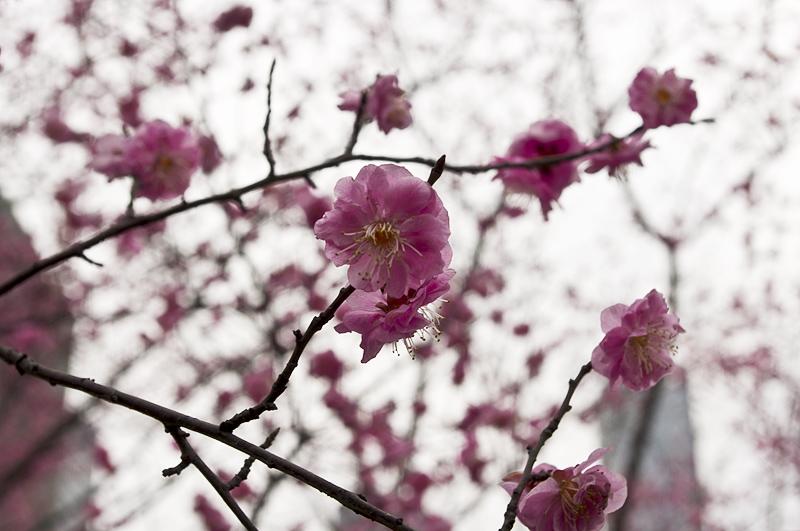 花卉园采花,kr,宾得,da70,小套,双陈记
